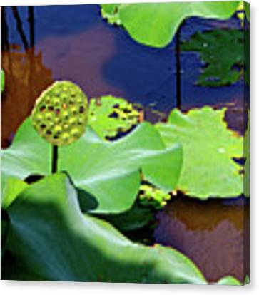 Seeds Of Lotus Canvas Print by Yen