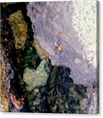 Slice Of Ice Canvas Print by Farzali Babekhan