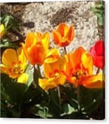 Springtime Flowers Canvas Print by Rachel Maynard