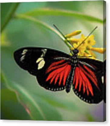 Butterfly, Stop And Smell The Flowers Canvas Print by Cindy Lark Hartman