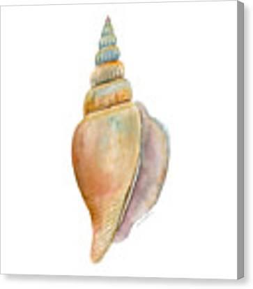Strombus Vittatus Shell Canvas Print