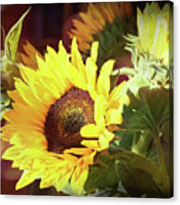 Sun Of The Flower Canvas Print by Michael Hope