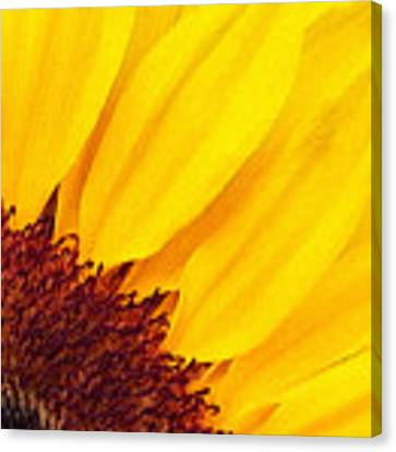 Summer Gold Canvas Print by Julian Perry