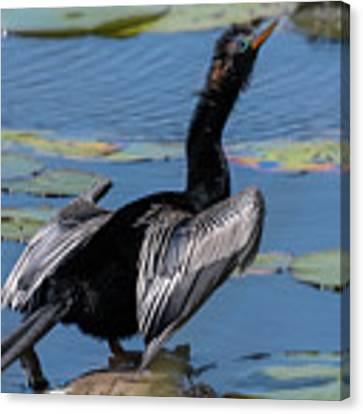 The Bird, Anhinga Canvas Print by Cindy Lark Hartman