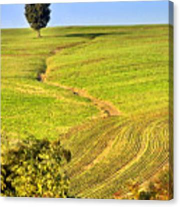 The Tree And The Furrows Canvas Print by Silvia Ganora