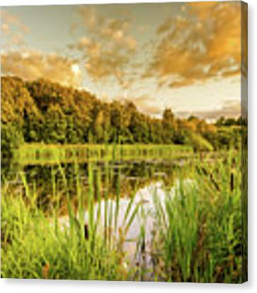 Through The Reeds Canvas Print by Nick Bywater