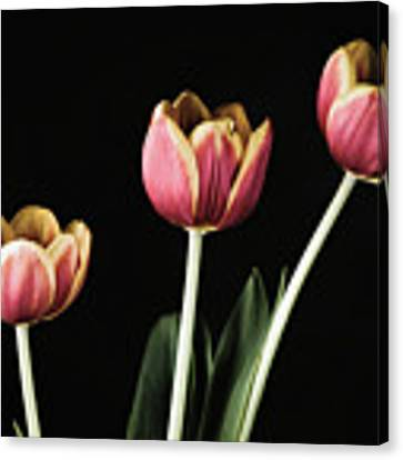 Tulip #176 Canvas Print by Desmond Manny