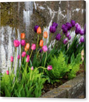 Tulips In Ruin Canvas Print by Michael Hubley