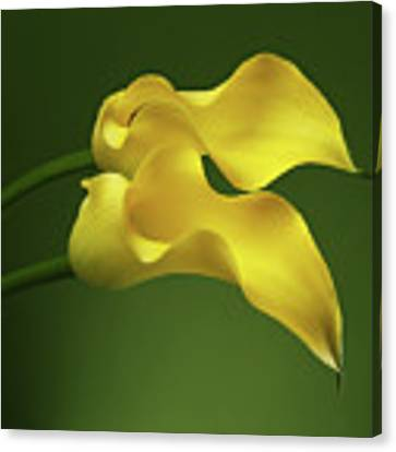 Two Calla Lily Flowers On Green Background Canvas Print by Sergey Taran
