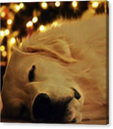 Waiting For Santa Canvas Print by Patti Whitten