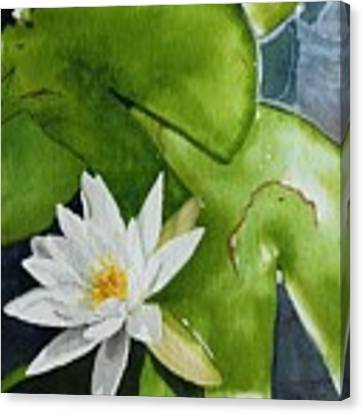 Water Lilly Canvas Print by Gigi Dequanne