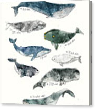 Whales Canvas Print by Amy Hamilton