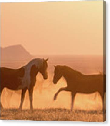 Wild Horse Glow Canvas Print by Wesley Aston