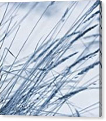 Winter Breeze Canvas Print by Priska Wettstein