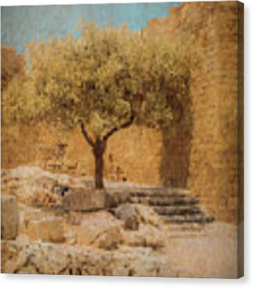 Rhodes, Greece - Young Olive Canvas Print by Mark Forte