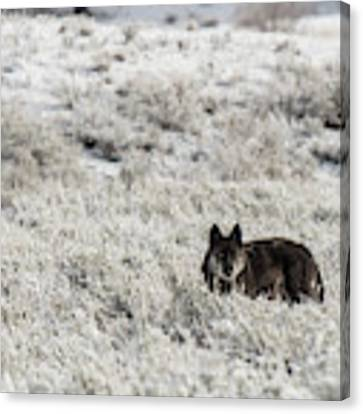 W18 Canvas Print by Joshua Able's Wildlife