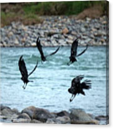4 Crows At The River Canvas Print by Mary Lee Dereske