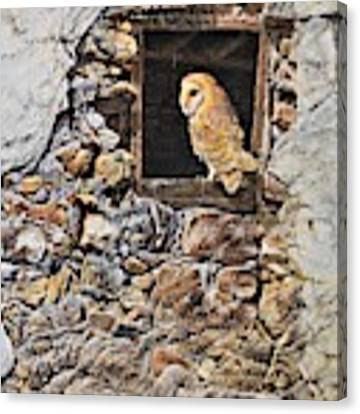 A New Home Barn Owl Canvas Print by Alan M Hunt