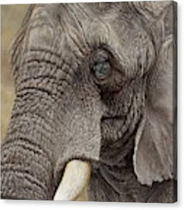 African Elephant Canvas Print by Alan M Hunt