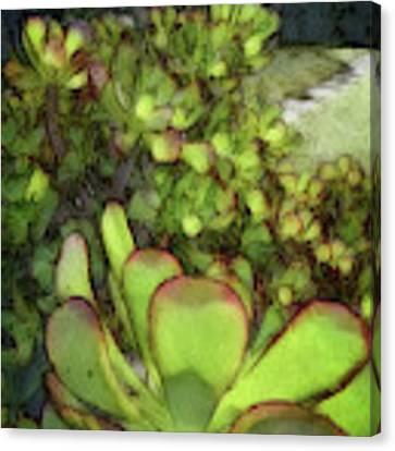 Aloe Succulent Canvas Print by Dee Flouton
