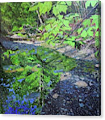 Amberley Creek 3 Canvas Print by Thomas Stead