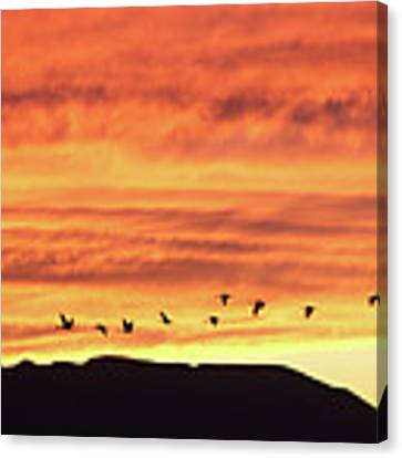 Arizona Sunset Of The Mule Mountains Canvas Print by Jean Clark