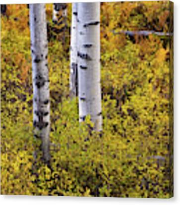 Autumn Contrasts Canvas Print by John De Bord