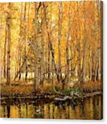 Autumn Gold Rush Canvas Print by Sean Sarsfield
