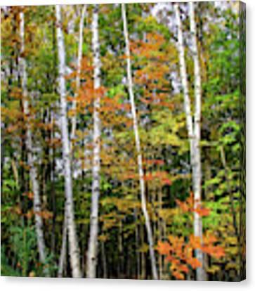 Autumn Grove, Vertical Canvas Print by Dawn Richards