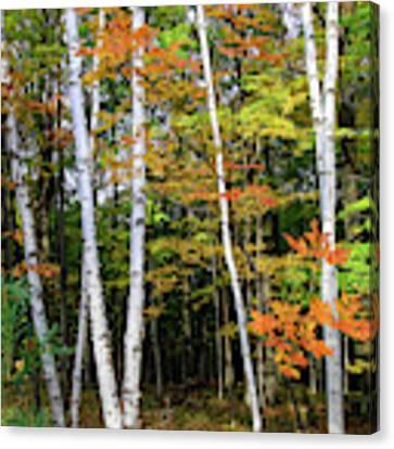 Autumn Grove, Wisconsin Canvas Print by Dawn Richards