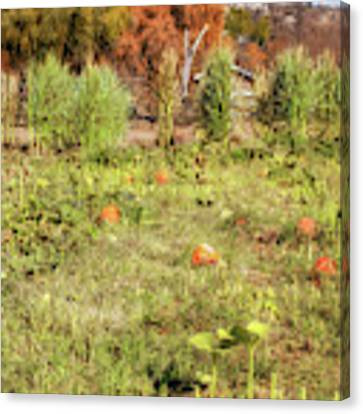 Autumn In The Pumpkin Patch Canvas Print by Alison Frank