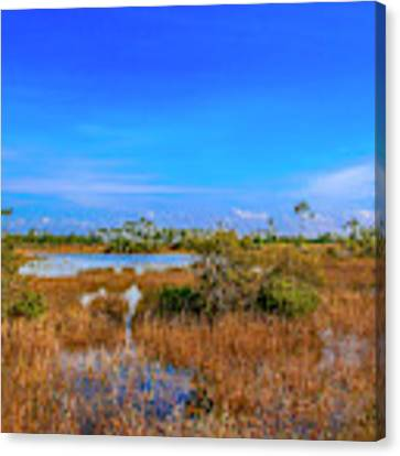 Blue Sky And Marsh Canvas Print by Tom Claud