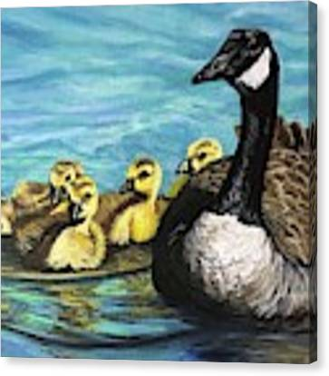 Canadian Goise And Goslings Canvas Print by Jeanette Jarmon