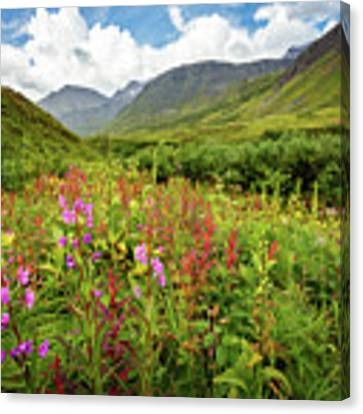 Chugach Midsummer Canvas Print by Tim Newton