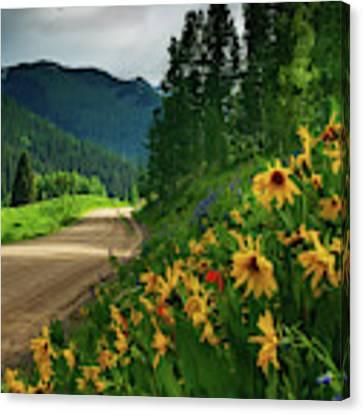 Colorado Wildflowers Canvas Print by John De Bord