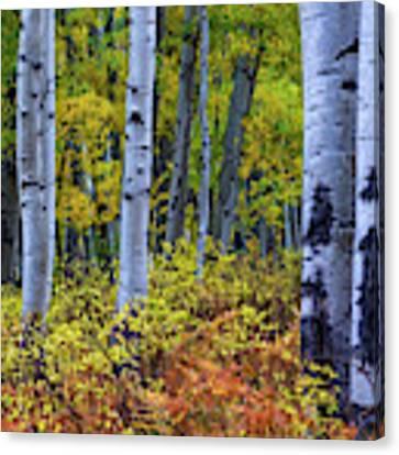 Colors Of October Canvas Print by John De Bord