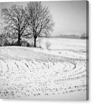Corn Snow Canvas Print by Kendall McKernon