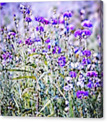 Cornflower Meadow Canvas Print by Susan Maxwell Schmidt