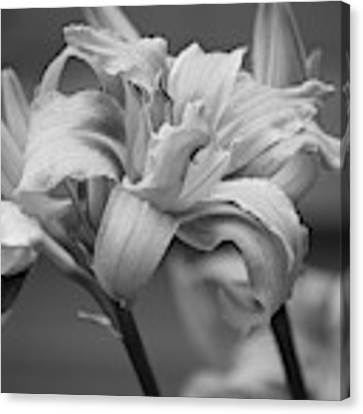 Day Lily Yellow Filter Canvas Print by Jeni Gray