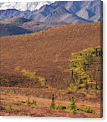 Denali Grizzly Canvas Print by Tim Newton