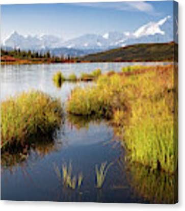 Denali Wonder Canvas Print by Tim Newton