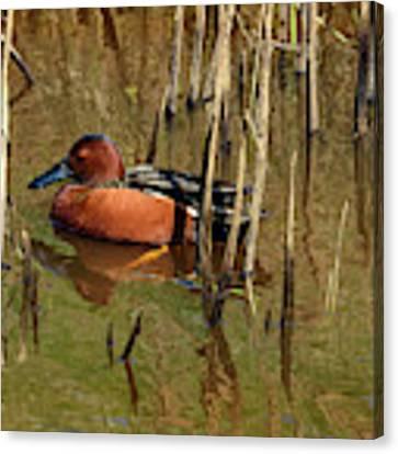Duck L'orange Canvas Print by Jon Exley