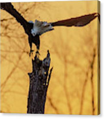 Eagle Flying Off Canvas Print by Steven Santamour