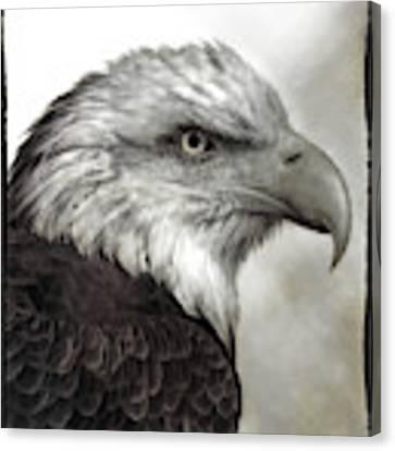 Eagle Protrait Canvas Print by Elaine Malott