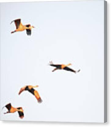 Early Morning Flight Canvas Print by Jean Clark