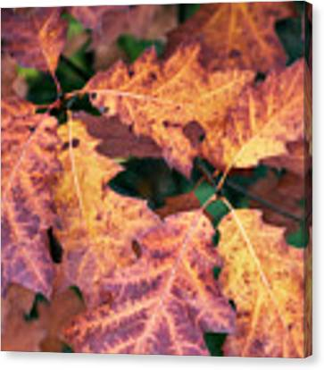 Fall Flames Canvas Print by Whitney Goodey