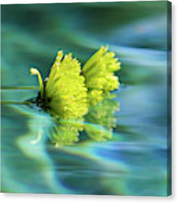 Floating Daisies 1 Canvas Print by Dawn Richards