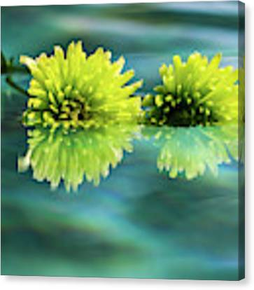 Floating Daisies 2 Canvas Print by Dawn Richards