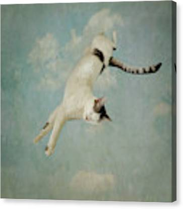 Flying Cat Canvas Print by Sally Banfill