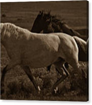 Freedom II Canvas Print by Catherine Sobredo
